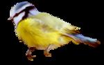 Птицы  разные  0_81f30_d5c6f9b_S