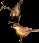 Птицы  разные  0_81f31_28c425f1_S