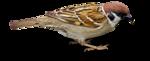 Птицы  разные  0_81f39_eff6b9a_S