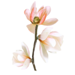 «PeachFacedLovebird» 0_82177_f435571a_S