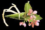 «PeachFacedLovebird» 0_8217c_3fbf20f3_S