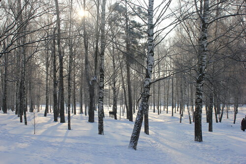 Белая Кострома 2012
