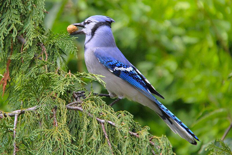 птица с голубыми крыльями картинки нейрографики сводятся