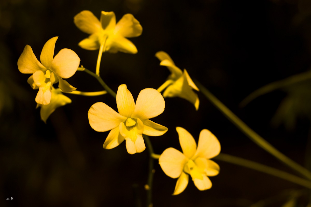 Зимний фестиваль орхидей в Аптекарском огороде Ботанического сада МГУ