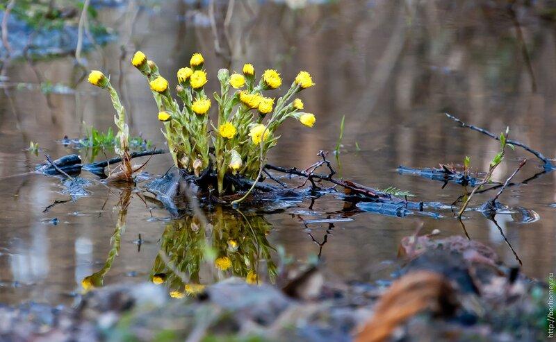 непонятные цветы