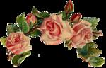 rosenrosa024.png