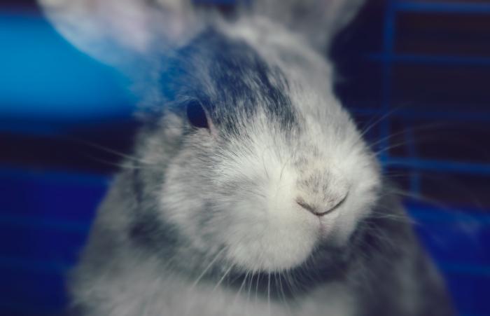 год кролика фото