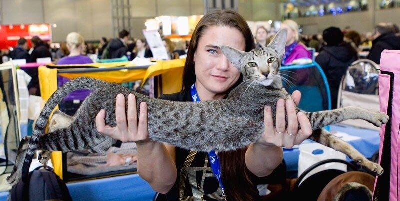 Выставка кошек 'Кэтсбург-2011', Москва, 6-7 марта 2011 года.