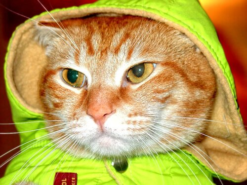 Мысли рыжего кота