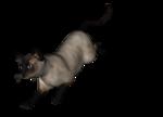 сиамские кошки (20).png