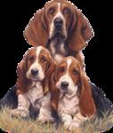Собаки  0_57c83_ea57d32e_S