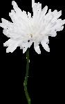 JanetB_HopesnDreams_flower4.png