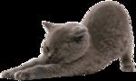 Кошки 5 0_53a5a_d5d50701_S