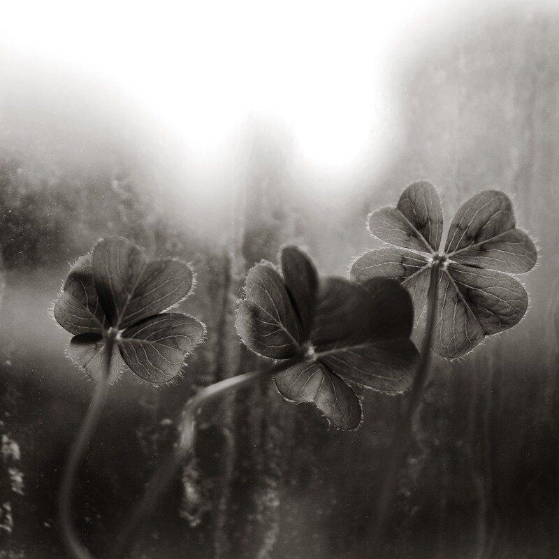 фотограф Zagadka Jozwik
