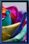 colorful_flowers_02.jpg