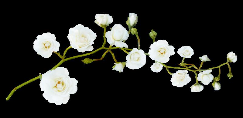 tube fleurs blanches - .