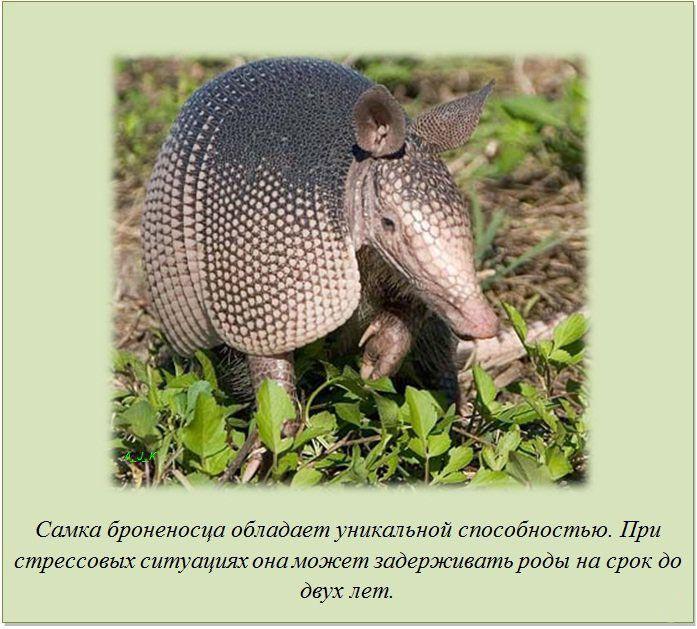 http://img-fotki.yandex.ru/get/5606/130422193.e9/0_76065_4250e922_orig