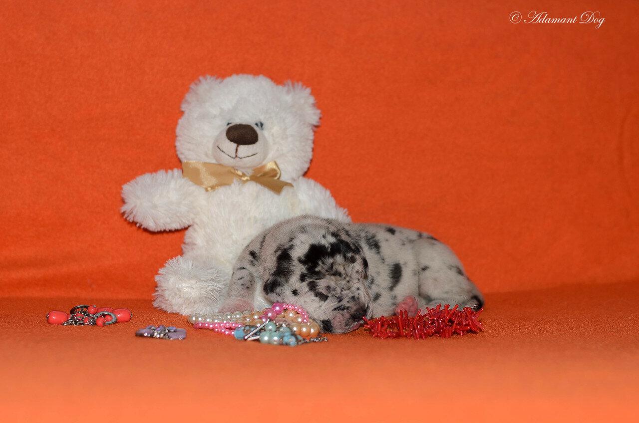 Продаются щенки в питомнике Олрей. Москва. 0_e66d3_5f72cb9c_XXXL