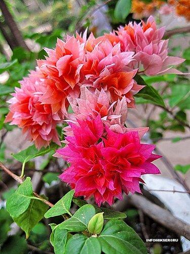 Африканское многоцветье