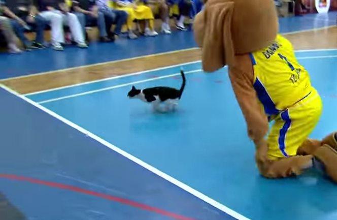 Как кот на баскетбольной площадке удирал от человека-собаки