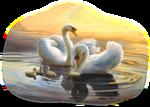 Птицы  разные  0_81ef9_d40c5492_S