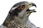 Птицы  разные  0_81f03_b7309618_S