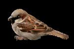 Птицы  разные  0_81f0b_4c6e13fb_S