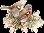 Птицы  разные  0_81f0e_8b7e3539_S