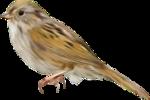 Птицы  разные  0_81f0f_a070ac5d_S