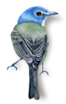 CreatewingsDesigns_FF_Bird7_Sh.png