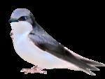 Птицы  разные  0_81f37_207e027d_S