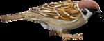 Птицы  разные  0_81f38_aaf5172c_S