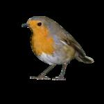 Птицы  разные  0_81f3b_c9898dea_S