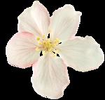 «PeachFacedLovebird» 0_8217b_2e4c39e2_S