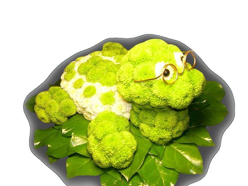 Как сделать черепаху из цветов