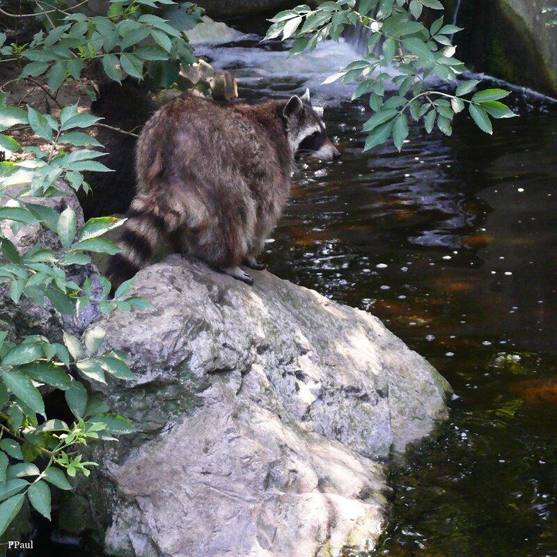 Дюйсбурнский Зоопарк