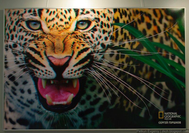Удивительный мир живой природы в формате 3d.