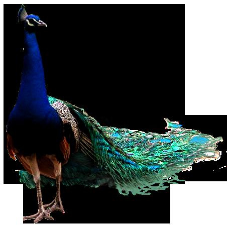 Ptice..... 0_85fbf_ad903145_L