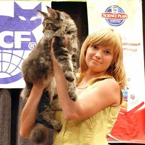 Best Kitten - 33 Pillowtalk's Da Masco (Male) MCO n 21 Абдулхакова О.Ю.,
