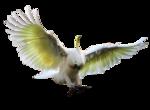 MR_Flying Bird.png