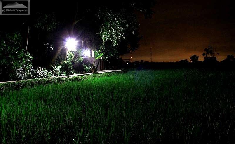 Рис ночью