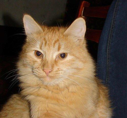 Первый парень на деревне -кот Балда