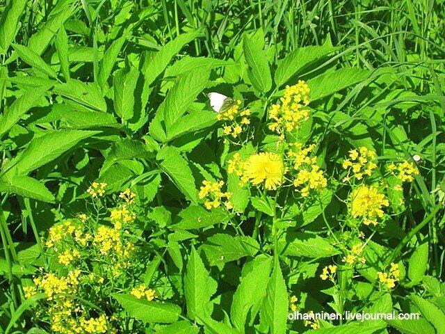 Яркая зеленая трава с желтыми цветами, а на ней насекомое