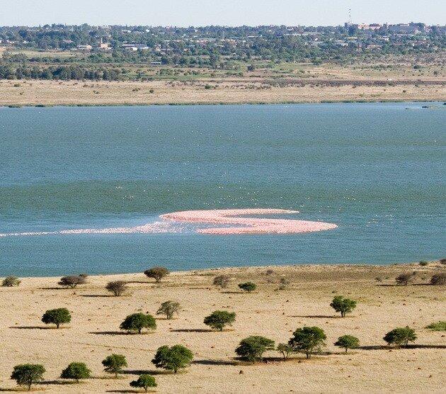 Остров фламинго. Kamfers Dam. ЮАР