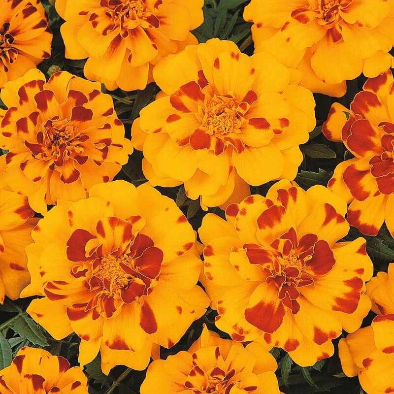 Plants to buy online, Note, the availability of many plants is seasonal.