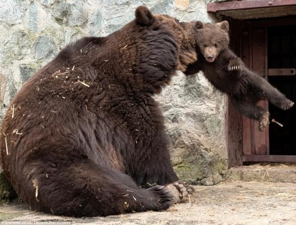 Медведь и скворечник ...