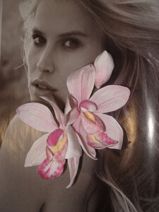 Орхидеи       - Страница 2 0_86de0_8e6c0ab_M