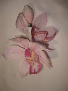 Орхидеи       - Страница 2 0_86dff_9701af72_M