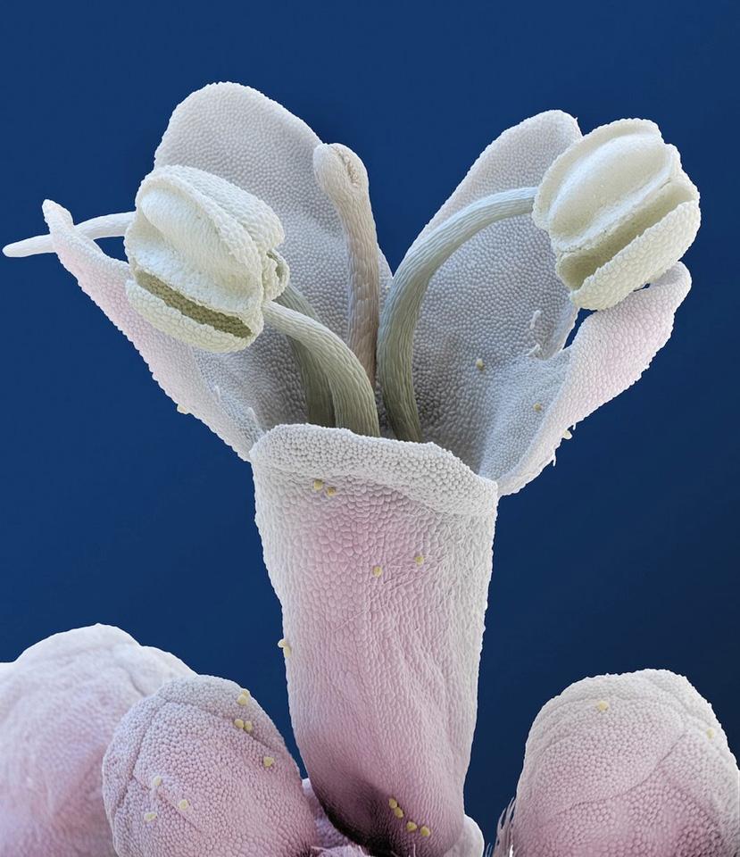 Skrytaya-krasota-cvetov-8-foto