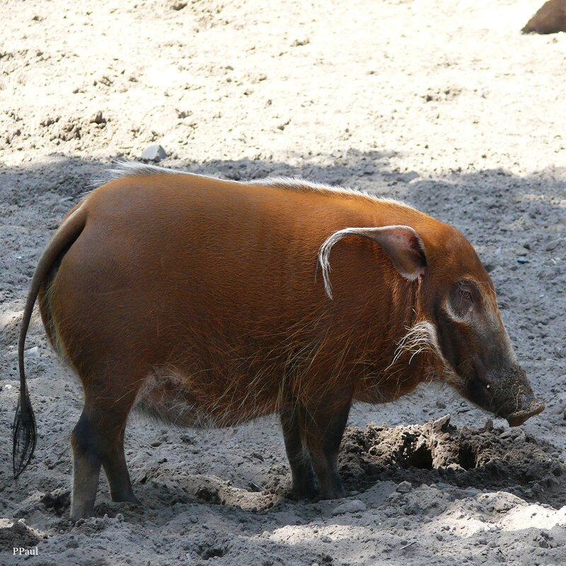 Дюйсбургский Зоопарк